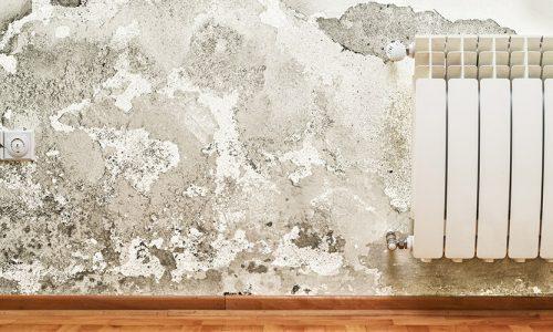 Eine mit Schimmel befallene Wand.